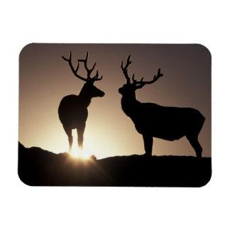 North America, USA, Colorado. Rocky Mountains Rectangular Photo Magnet