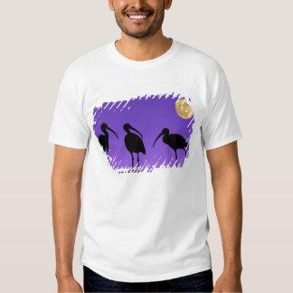 North America, USA, Florida, Mt. Dora, Tee Shirts