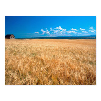 North America, USA, Idaho. Barley field in Postcard