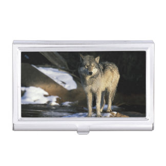 North America, USA, Minnesota. Wolf (Canis Business Card Cases