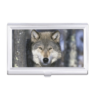 North America, USA, Minnesota. Wolf Canis Business Card Cases