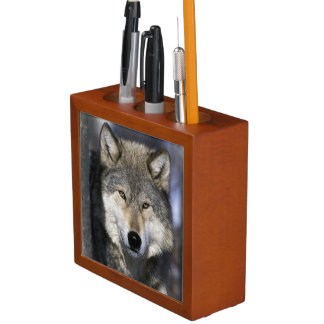 North America, USA, Minnesota. Wolf Canis Desk Organiser