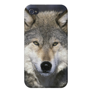 North America, USA, Minnesota. Wolf Canis iPhone 4 Case