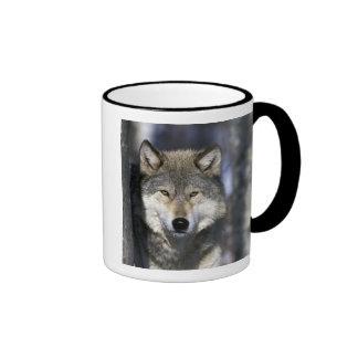 North America, USA, Minnesota. Wolf Canis Ringer Mug