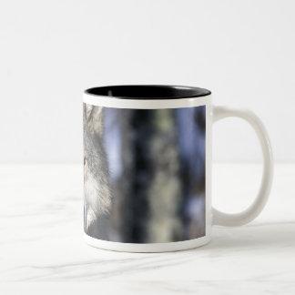 North America, USA, Minnesota. Wolf Canis Two-Tone Mug