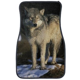 North America, USA, Minnesota. Wolf (Canis Floor Mat
