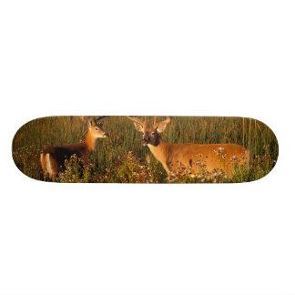 North America, USA, Montana, National Bison Custom Skateboard
