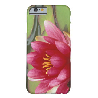 North America, USA, WA, Seattle, Woodland Park 2 Barely There iPhone 6 Case