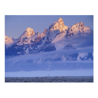 North America, USA, Wyoming, Grand Teton NP, 2 Postcard