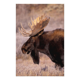 North America, USA, Wyoming, Grand Teton NP, Photo Print