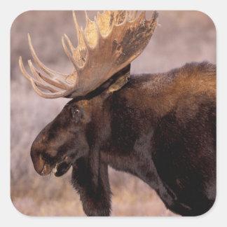 North America, USA, Wyoming, Grand Teton NP, Square Sticker