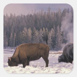 North America, USA, Wyoming, Yellowstone NP, Square Sticker
