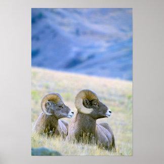 North America, USA, Wyoming, Yellowstone Poster