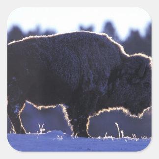 North America, Wyoming, Yellowstone National Stickers