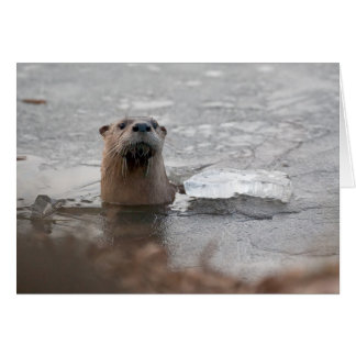 North American River Otter Card