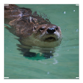 North American River Otter Personalized Announcement