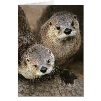 North American River Otters Card