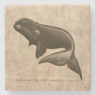 North Atlantic Right Whale Stone Coaster