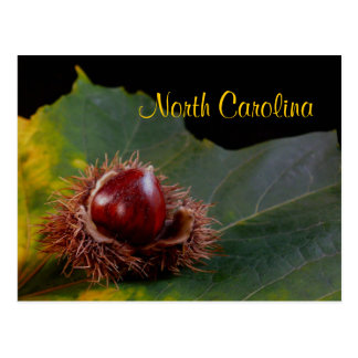 North Carolina, Autumn Leaf With Nut Postcard
