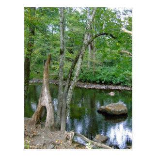 North Carolina Creek Postcard