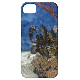 North Carolina Sea Horse iPhone 5 Cases