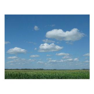 North Dakota Corn Field Postcard
