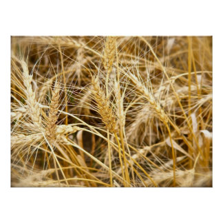 North Dakota Wheat Poster