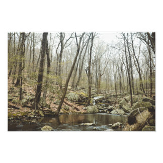 North Jersey Oasis Photo Print