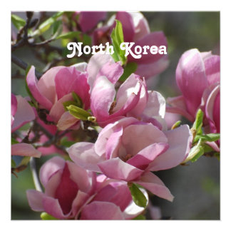 North Korea Magnolia Announcements