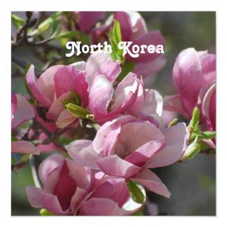 North Korea Magnolia Announcements