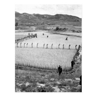 North Korean prisoners_War Image Postcard