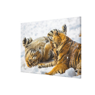 Northeast Tiger Gallery Wrapped Canvas