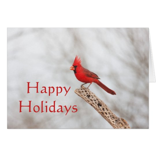 Northen Cardinal on a branch, Happy holidays Card