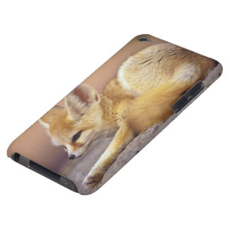 Northern Africa. Fennec Fennecus zerda) Barely There iPod Cases