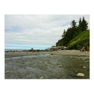 Northern California Coastline from Redwood Park Postcard