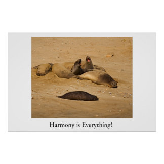 Northern California elephant seals Print