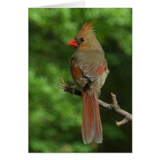 Northern Cardinal Bird Note Card