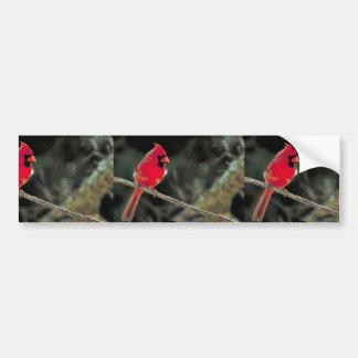 Northern cardinal bumper sticker