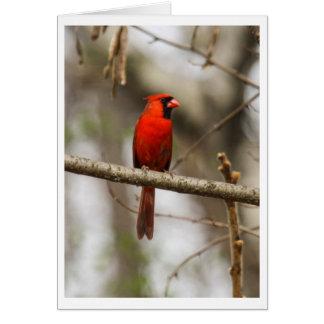 Northern Cardinal Card