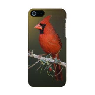 Northern Cardinal, Cardinalis cardinalis, male Incipio Feather® Shine iPhone 5 Case