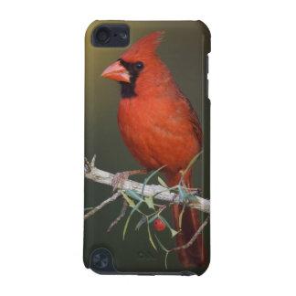 Northern Cardinal, Cardinalis cardinalis, male iPod Touch (5th Generation) Covers