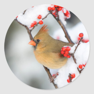 Northern Cardinal female on Common Winterberry Round Sticker