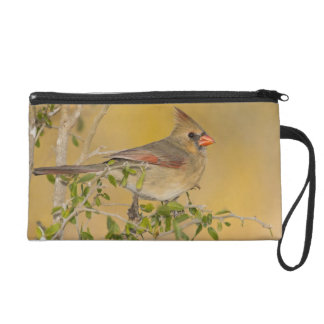 Northern Cardinal female perched on branch Wristlet Clutches