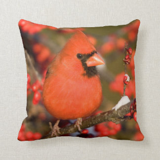 Northern Cardinal in Common Winterberry Cushion