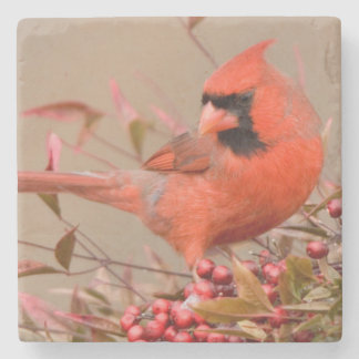 Northern Cardinal in Nandina Heavenly Bamboo Stone Coaster