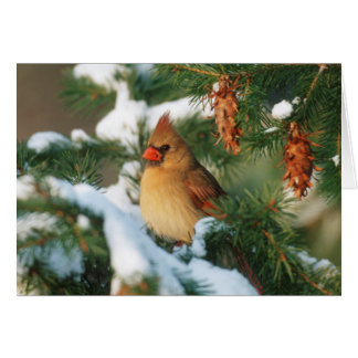 Northern Cardinal in tree, Illinois Card