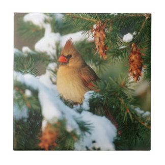 Northern Cardinal in tree, Illinois Ceramic Tile