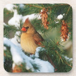 Northern Cardinal in tree, Illinois Drink Coaster