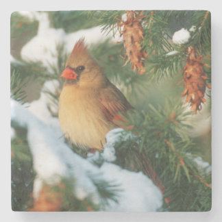 Northern Cardinal in tree, Illinois Stone Beverage Coaster