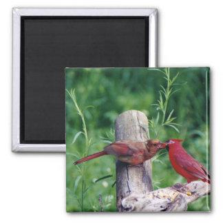 Northern Cardinal Magnet